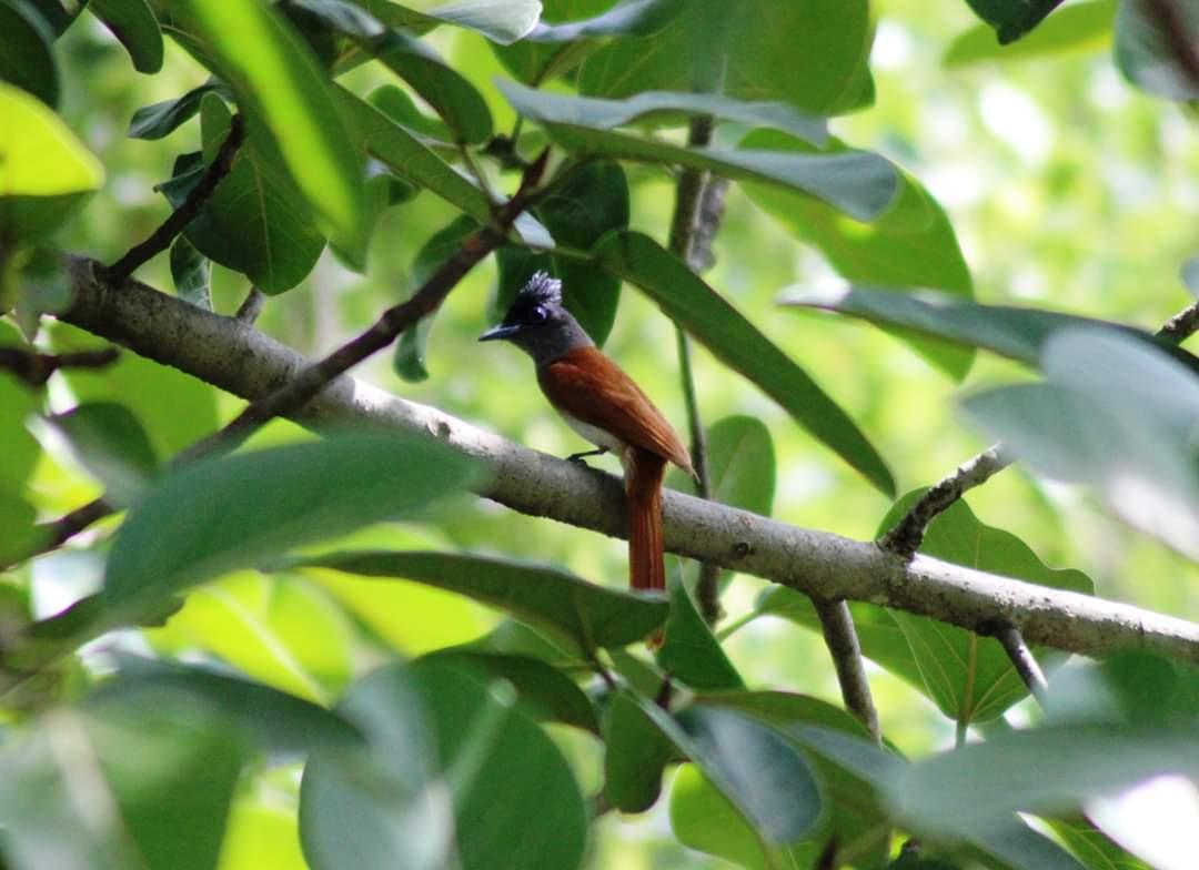 लॉक डाउन का असर!शहर के बीचो बीच पाया गया एकांत में रहने वाला पक्षी