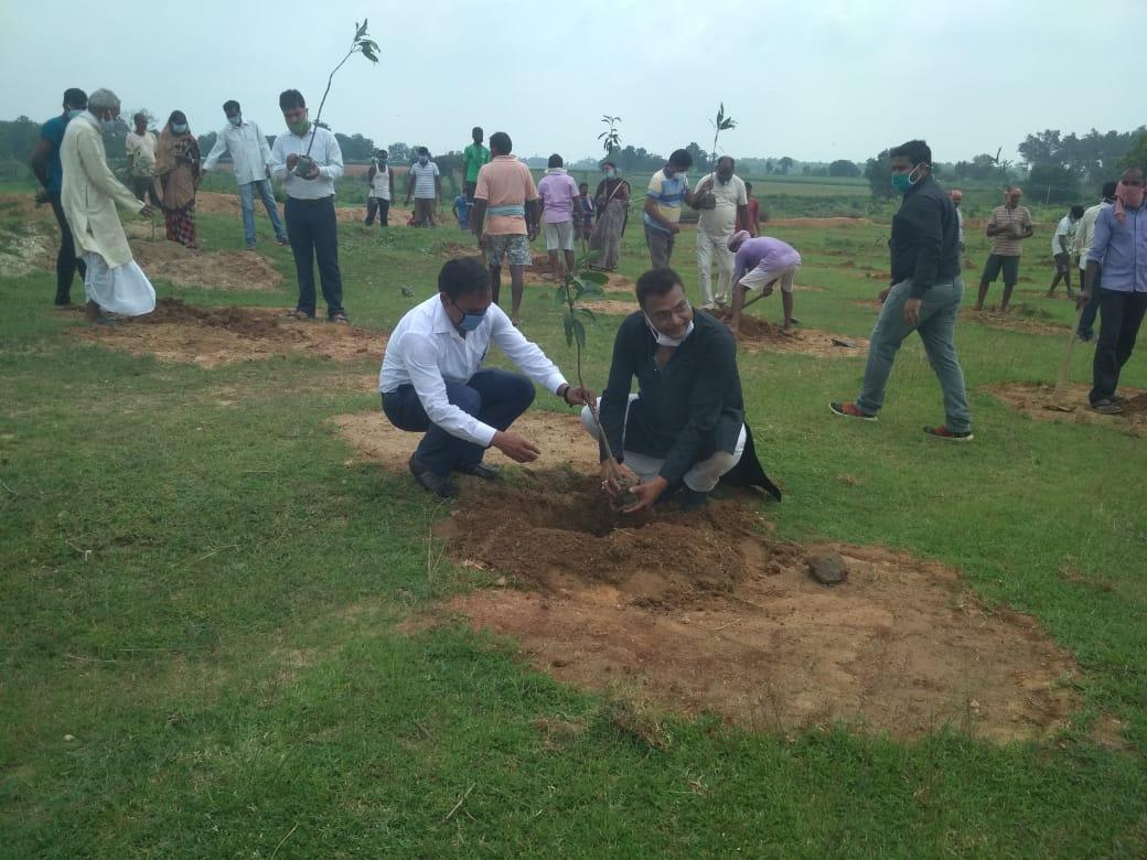 दारू प्रखंड में मनरेगा के तहत चलाया गया आम वृक्षारोपण अभियान
